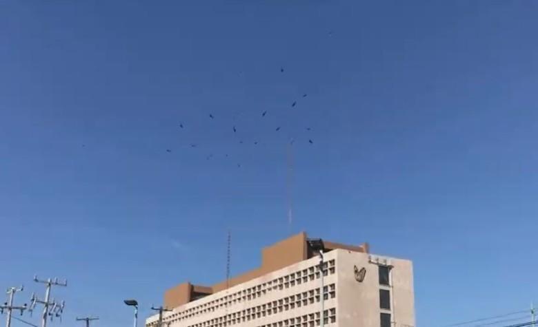 Aves de rapiña fueron grabadas volando arriba de una clínica del IMSS, en Chihuahua.