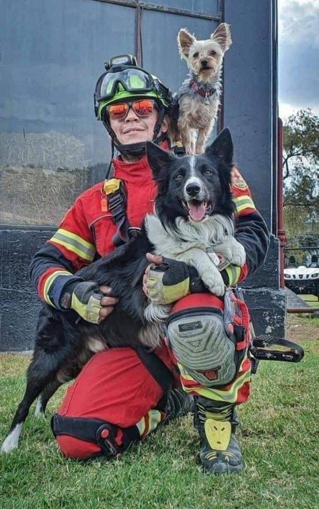 """La comunidad de rescatistas en México está de luto luego de los perros """"Athos"""", especialista en búsqueda y rescate, murió envenado en Querétaro con salchichas, así como su compañero, el can """"Tango""""."""